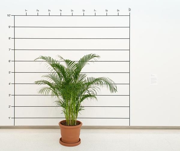 Combined media artwork by Mel Bockner titled Measurement Palm